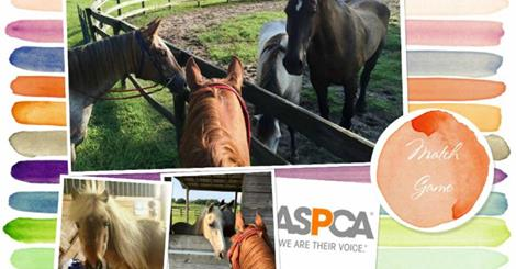 aspca_match