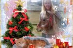 Christmas Betsy Olden _1_